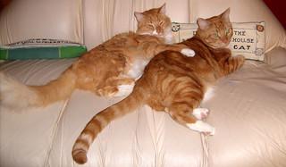 20091213 - kitties - GEDC1156 - LJ glaring