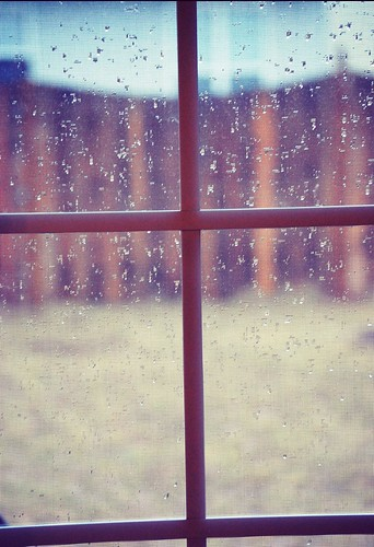 rain...rain   (17/365)