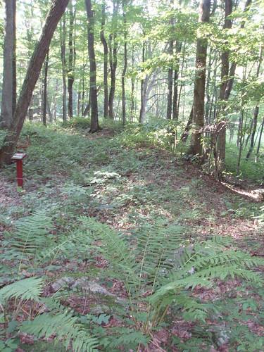mountains army westvirginia militaryhistory 1861 americancivilwar randolphctywv
