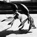 The last waltz... by Madalina Barna