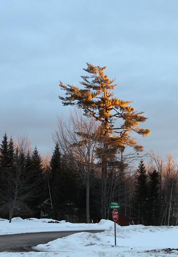 pinetree sunrise newbrunswick stopsign hanwell dirtyroad