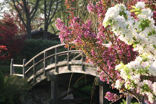 Missouri Botanical Garden To Plant Ceremonial Cherry Blossom Tree Recognizing 100th Anniversary