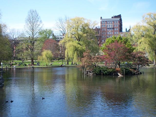 the public garden pond