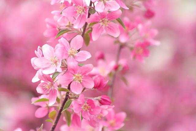 The Pinkest Pink