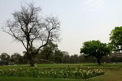 chandigarh gardens