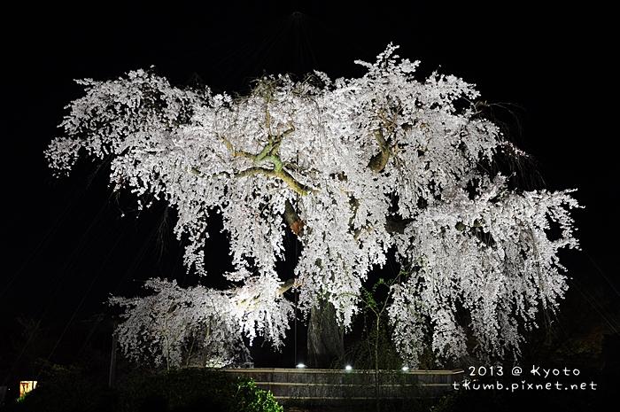 円山公園 (6).jpg