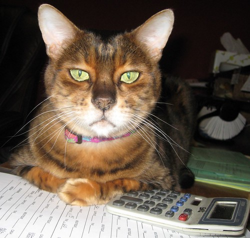 winnie 014 accountant kitty is not amused