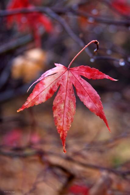 Have a nice November Sunday