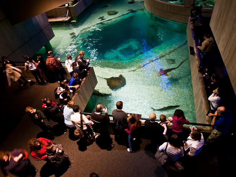50 Photos Of National Aquarium In Baltimore Places Boomsbeat
