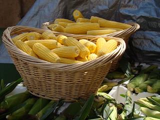 Fresh Sweet Corn