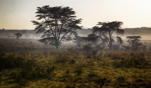 landscape landschaft trees bäume dust staub nature natur wildlife morninglight morgenlicht 2011 lakenakurunationalpark kenya kenia africa afrika anymotion reisen travel 5d2 canoneos5dmarkii ngc npc