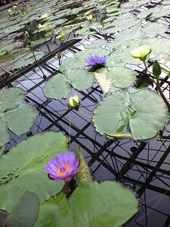 掛川花鳥園 (19)