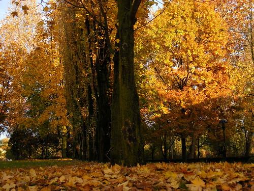Cavenago autunno