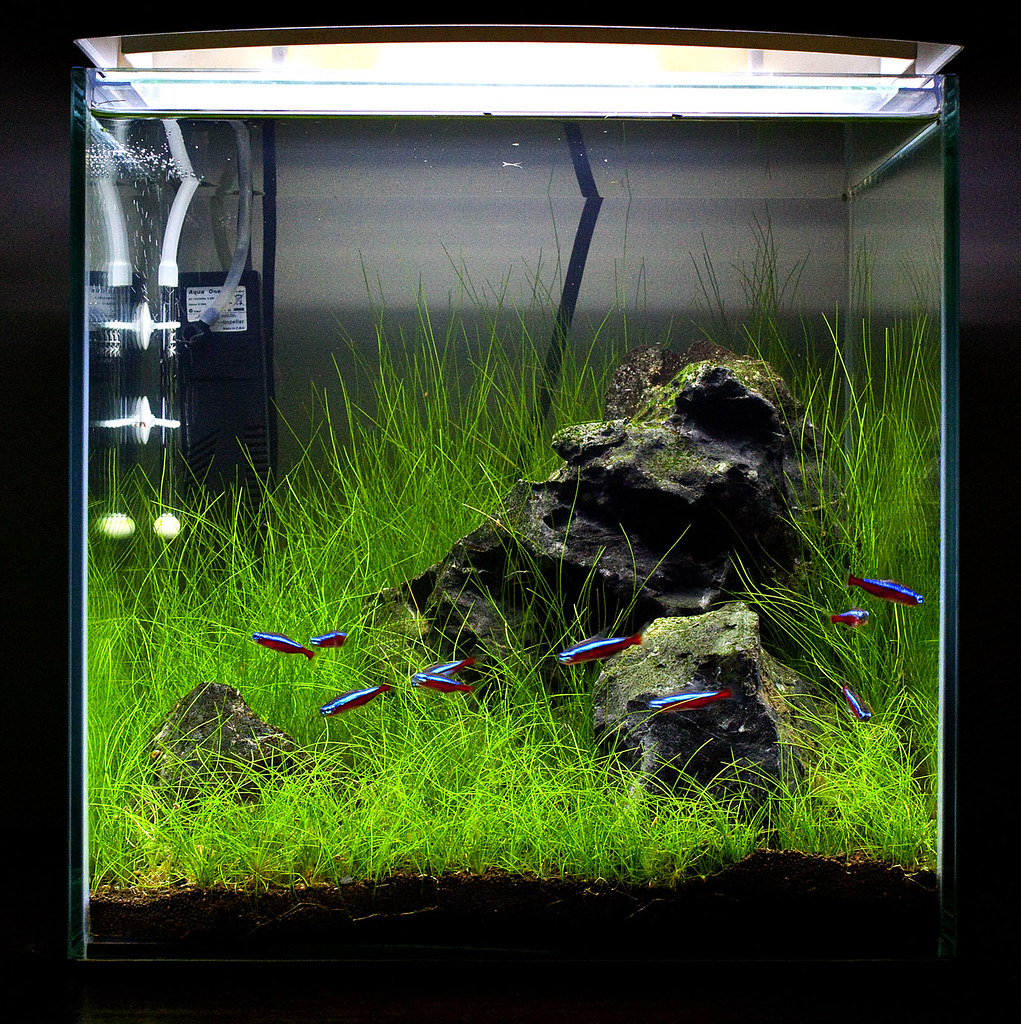 Kerry ada style cylinder tank for Ada fish tank