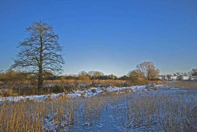 on hopton fen dec 09