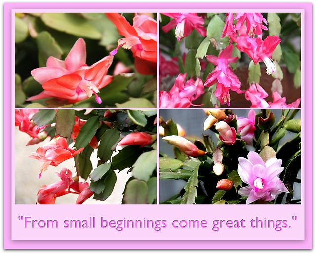 from small beginnings - photo #17