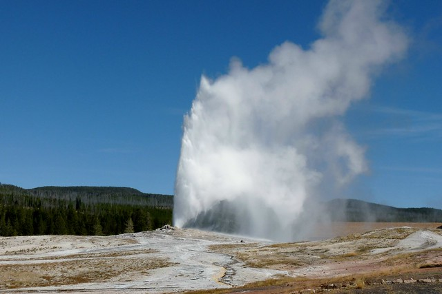 Old Faithful in Yellowstone National Park by Flickr user carolynconner