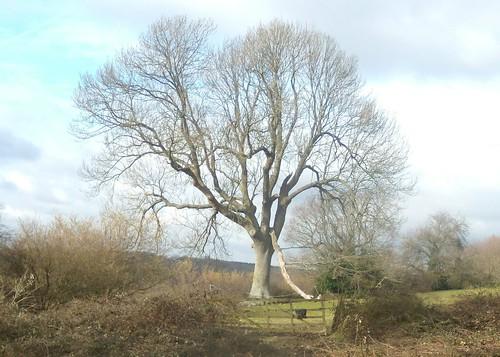 Tree in winter light