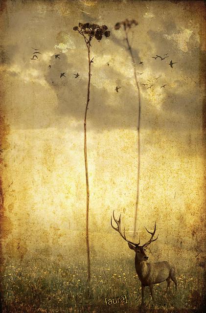 Deer - Bestial serie