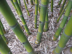 agriculture, leaf, bamboo, tree, green,