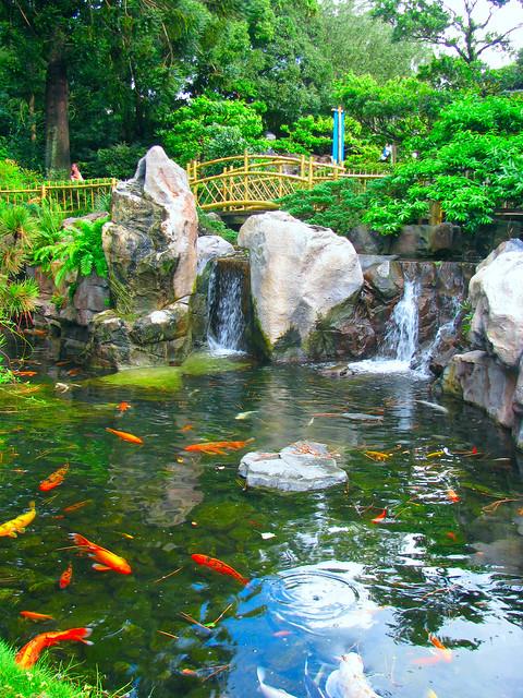 Koi fish pond flickr photo sharing for Koi fish to pond ratio