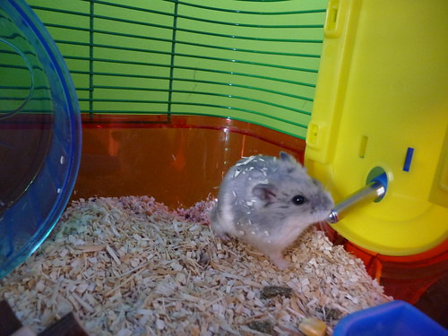 All about the fancy russian dwarf hamster???!!! Which cage ...