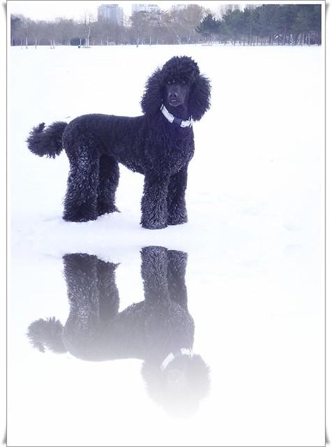 Darleen in the snow, Panasonic DMC-FX60
