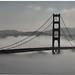 Velvet Fog  - Golden Gate Bridge by MyRidgebacks - Sharon C Johnson