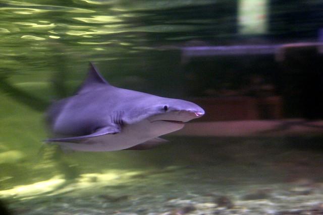 Riples Aquarium