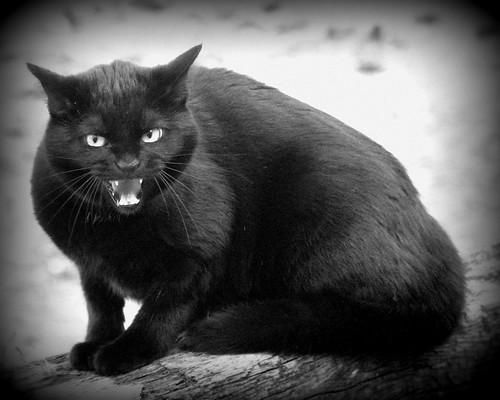 Black Cat. : 黒ネコ画像まとめ - NAVER まとめ