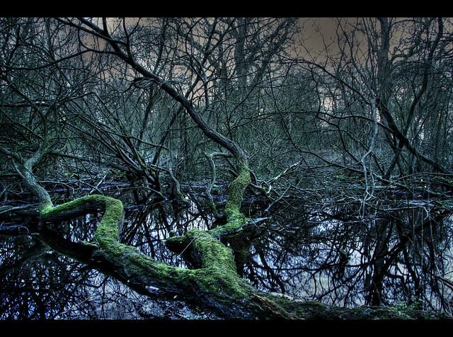 Forgotten swamp