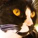 Our Kitties...