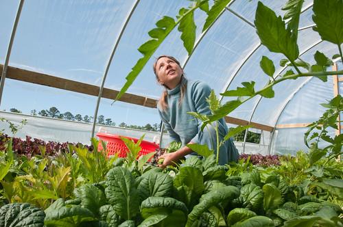 Amy's Organic Garden