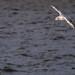 Edg_Res_Birds-4.jpg