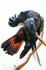 LisaSista visits Maleny Bird World