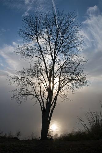 ca sky mist lake fog clouds sunrise sanjose almadenlakepark