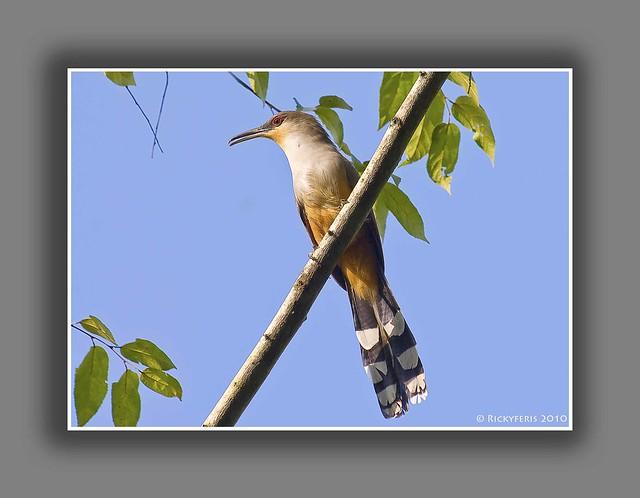 Pájaro Bobo