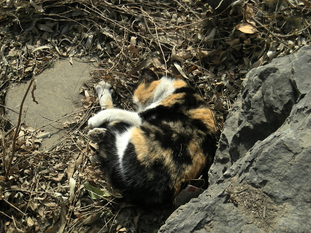 路边小花猫 | flickr – 相片分享!