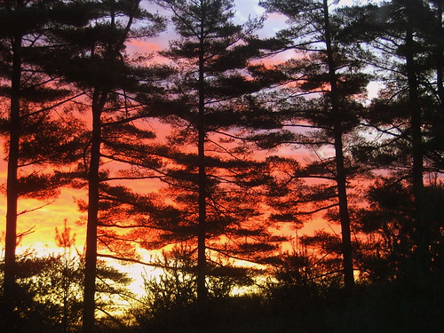 morning trees red cloud color colors pine clouds sunrise woods purple connecticut groton whitepines