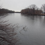 Charles River, 1 March 2010: Grey skies & waters