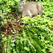seen during lunch   deer in the backyard