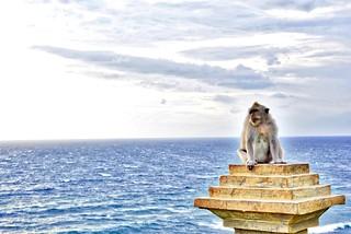 The Uluwatu Monkey