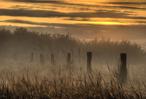 morning mist canada fog sunrise fence photo amazing bc britishcolumbia victoria vancouverisland islandviewbeach