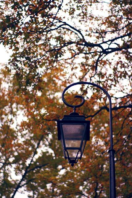 Wet autumnal lamppost