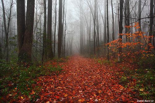 Trail of Leaves in the Fog