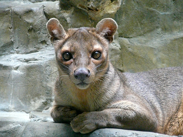 "Fossa, ""Jack"" at PC&A Building"