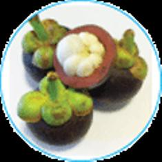 Mangosteen Supplement