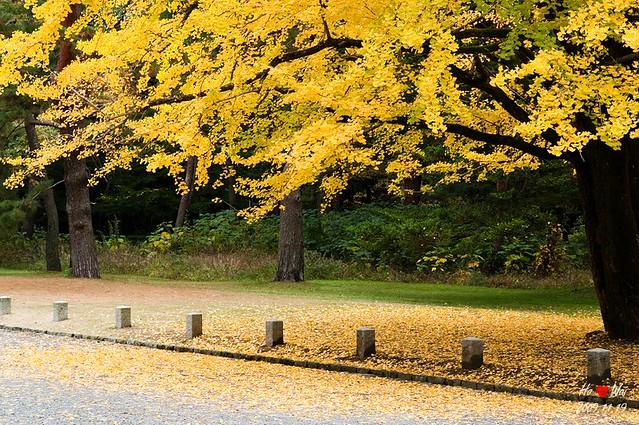 1119_kyoto_0910