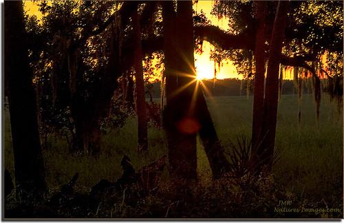 landscapes parks sunsets blending stateparks 2470mm myakkastatepark floridaimages floridastateparks