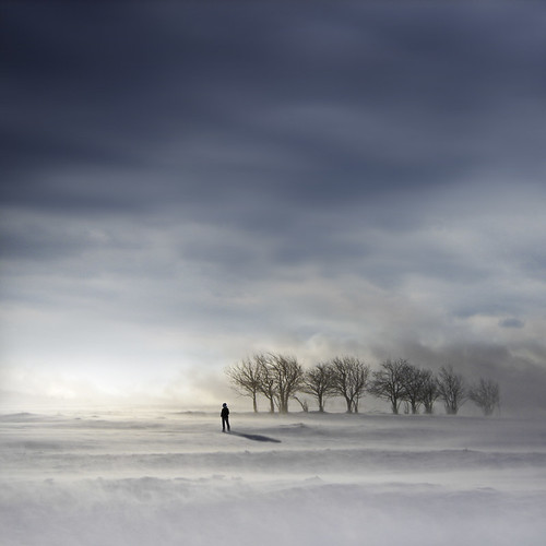blue trees winter light sky snow cold square frozen solitude tears alone loneliness wind horizon atmosphere eerie intriguing meditation contemplative contemplation
